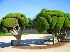 ретиро.деревья